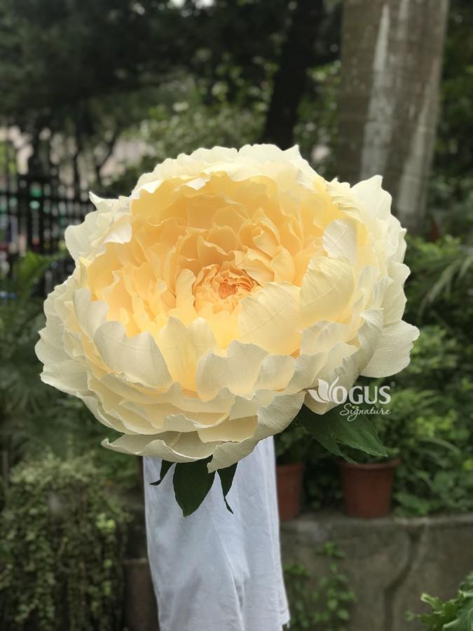 Giúp sự kiện đẹp hút hồn với cây hoa khổng lồ mẫu đơn vàng kem Ogus